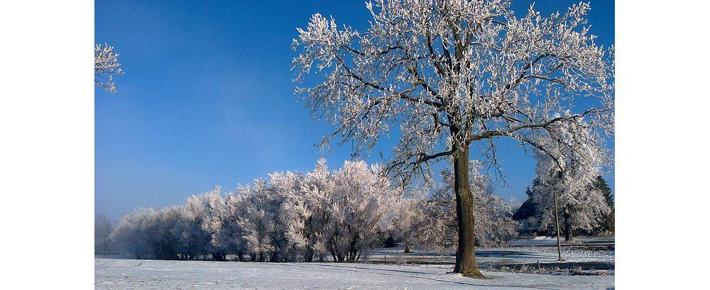 Farma Almako zima
